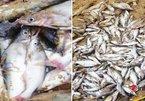 Nghệ An: Lấy mẫu nước kiểm tra vụ cá chết hàng loạt trên sông Con