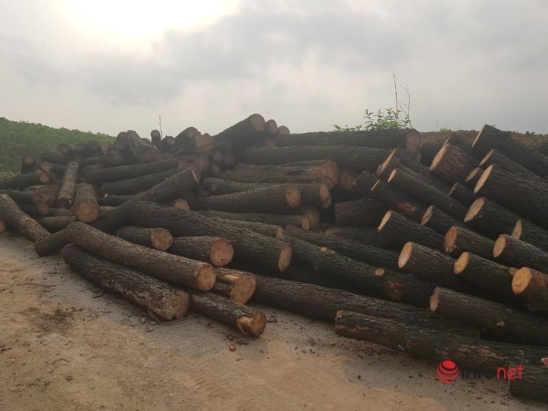 Chặt phá rừng,Rừng thông,Hà Tĩnh