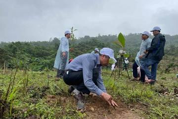 Khởi động dự án 'Cùng phục hồi rừng đầu nguồn sông Gianh'
