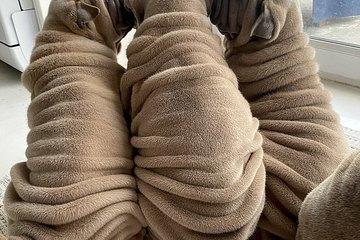 Chú chó sở hữu bộ lông nhăn nheo nhất thế giới nhưng đáng yêu cực độ