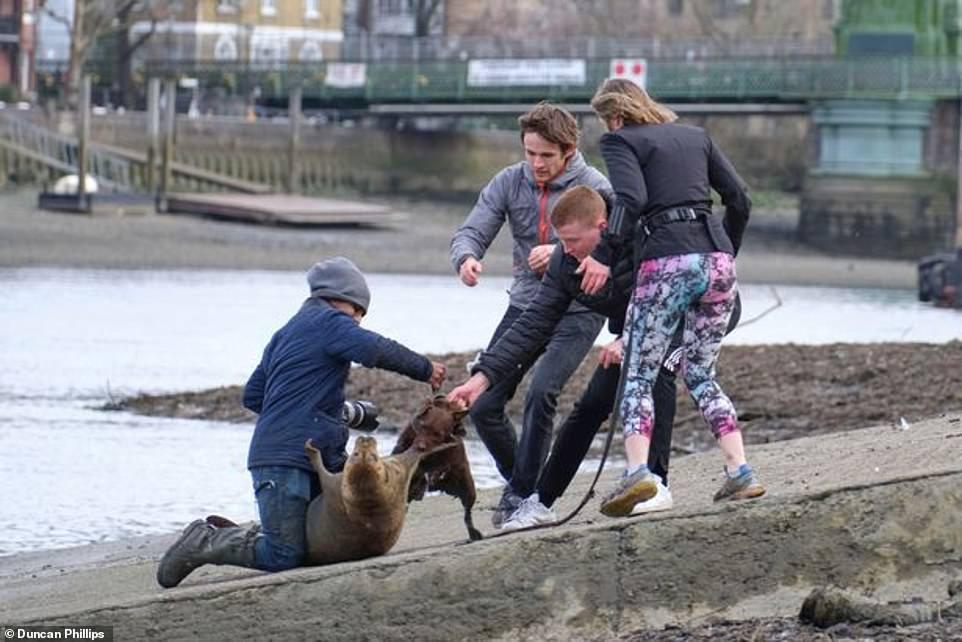 Cuộc chiến giữa chó nhà và hải cẩu