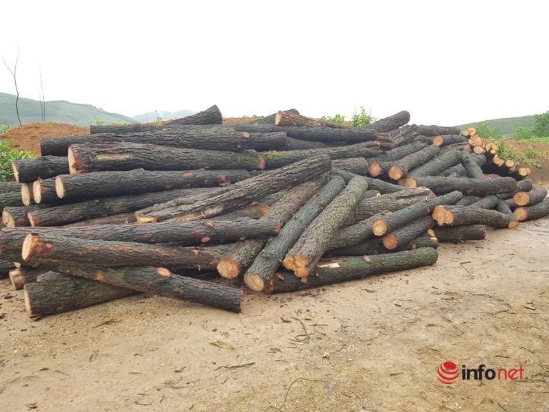 Phạt 10 triệu đồng, tịch thu gần 5m3 gỗ thông khai thác trái phép ở Hà Tĩnh