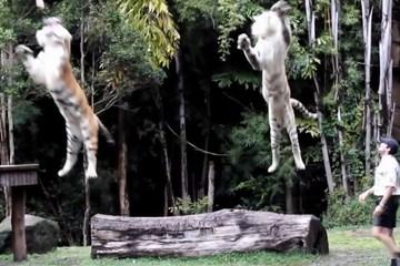 Cưỡi lên lưng 1 con voi liệu đã an toàn trong môi trường hoang dã?