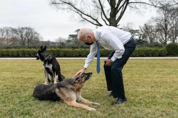 Chú chó của ông Biden từng cắn đặc vụ trở lại Nhà Trắng