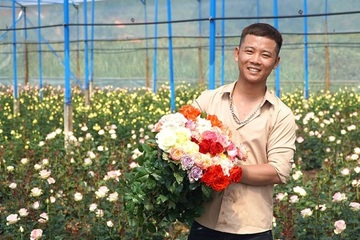 Bỏ nghề kỹ sư lên Lâm Đồng học trồng hoa, chàng nông dân trẻ sở hữu trang trại hồng rộng lớn