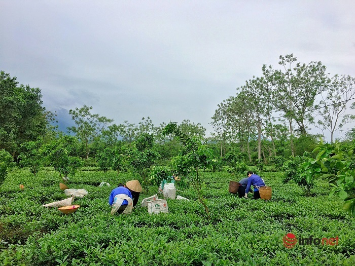 Rộn ràng mùa hái lộc xuân ở Thái Nguyên