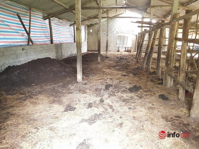 3 hộ dân vẫn nuôi bò gần hồ đầu nguồn cấp nước sinh hoạt cho TP Hà Tĩnh và các huyện lân cận