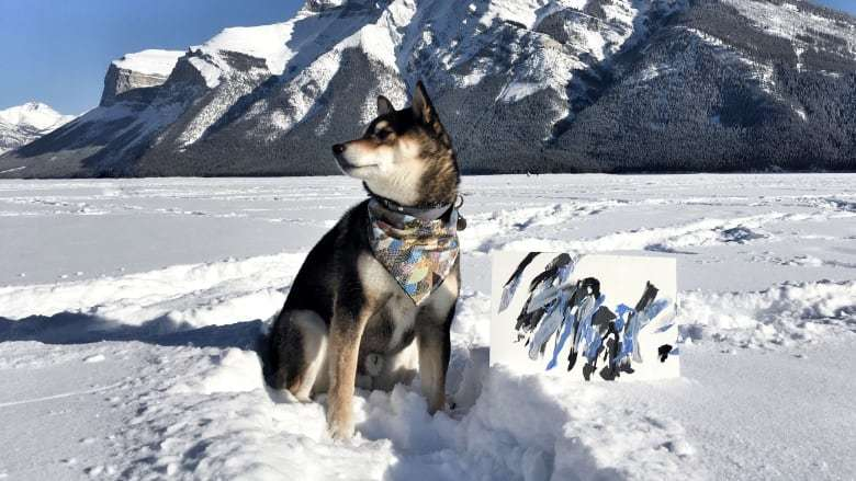 Chú chó shiba nổi tiếng với tài vẽ tranh thu về hàng ngàn đô la