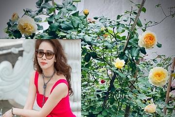 Vườn hồng ngoại đẹp mê hoặc của mẹ đảm 8X tại Hà Giang
