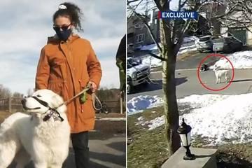 Chú chó chặn xe gọi người cứu cô chủ lên cơn co giật ngất xỉu giữa đường
