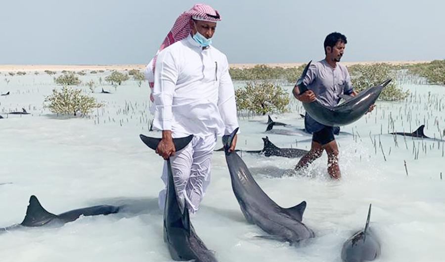 Đàn cá heo khốn khổ vì mắc cạn trên bờ biển