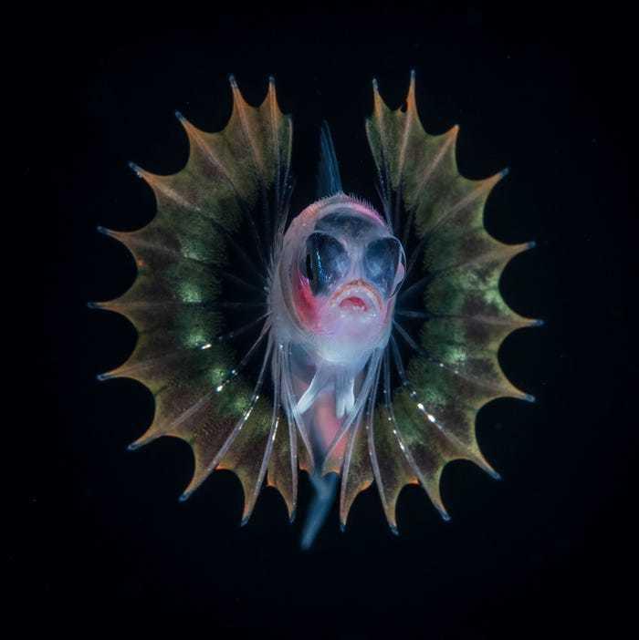 Thế giới kỳ lạ và huyền diệu dưới đáy đại dương ai nhìn cũng trầm trồ kinh ngạc