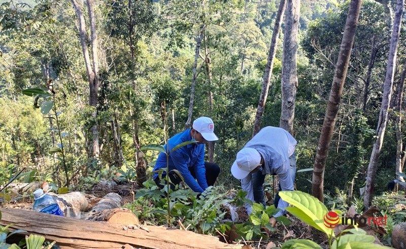 Triển khai, nhân rộng mô hình rừng cây cộng đồng ở Quảng Nam