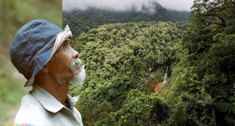 24 năm mải mê trồng cây, người đàn ông thu được kết quả không ngờ