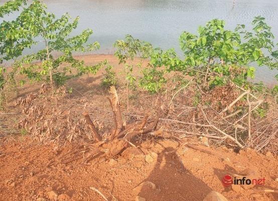 Con đường không phép lù lù mọc lên vùi phá hàng nghìn m2 rừng, chính quyền tìm không ra 'thủ phạm'?