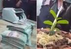 """7cm lan đột biến bán thu tiền tươi 1,65 tỷ đồng, Bí thư thốt lên """"Thật khủng khiếp, bằng hai mấy tấn lúa"""""""