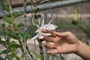 """Thông tin mới về vụ chủ vườn lan đột biến """"ôm"""" 200 tỷ đồng bỏ trốn: Có 30 người đã từng giao dịch với vườn lan"""
