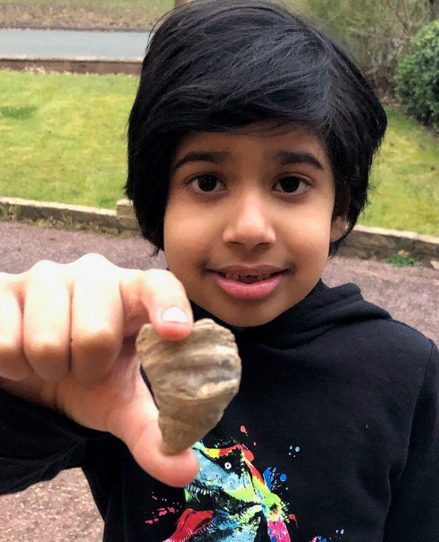 Đang nghịch đất, bé 6 tuổi phát hiện san hô cổ xưa hiếm có