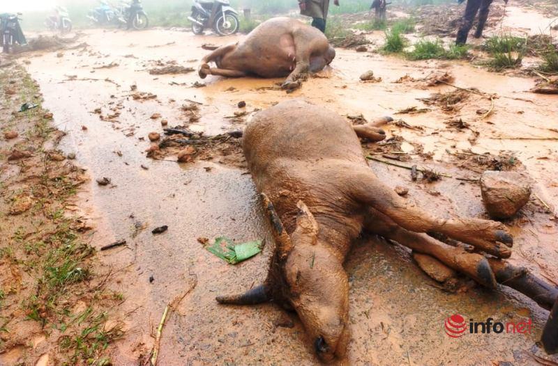 Phòng chống thiên tai,thiệt hại,phương châm 4 tại chỗ,lũ ống,ứng phó,UBND tỉnh Nghệ An