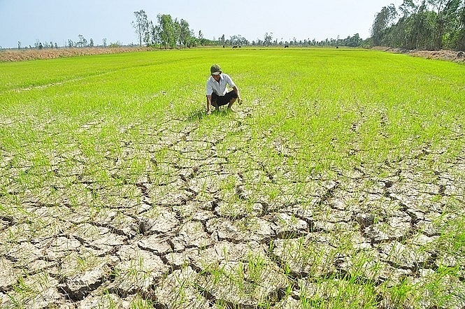 xâm nhập mặn,đất nhiễm mặn,sản xuất nông nghiệp,thiên tai
