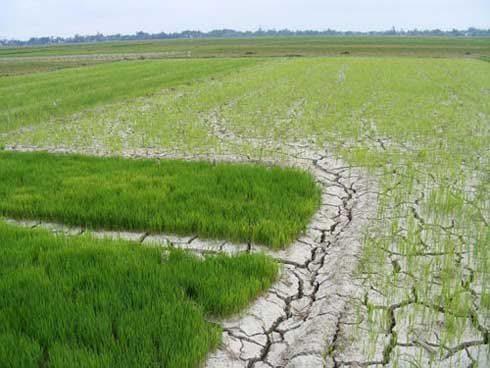Sau tháng 3, xâm nhập mặn ở các cửa sông Cửu Long có xu thế giảm dần