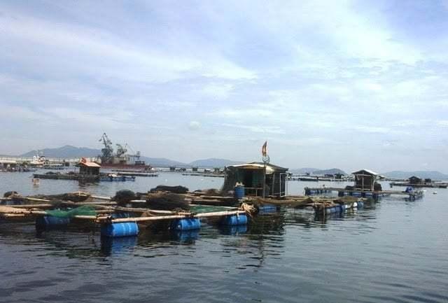 Gần 30 tấn cá chết bất thường ở Nghi Sơn