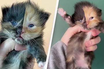 Những con mèo mặt hai màu kỳ lạ nổi tiếng nhất thế giới