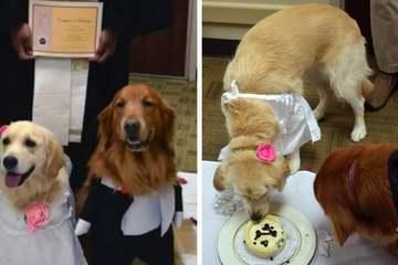 Bệnh viện Mỹ tổ chức đám cưới cho hai chú chó trị liệu