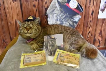 Mèo cưng kỷ niệm 3 năm đảm nhận chức trưởng ga ở Nhật Bản