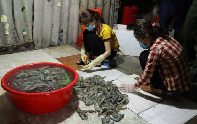 Hà Nội, bắt quả tang cơ sở bơm tạp chất vào tôm cung cấp cho nhà hàng