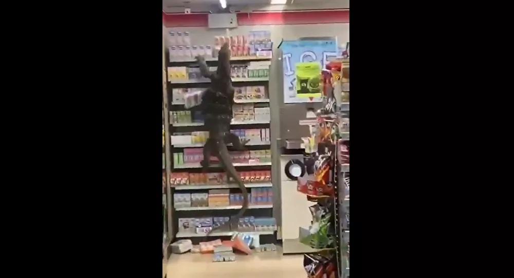 Nhiều người hoảng loạn khi nhìn thấy thằn lằn khổng lồ 'đi siêu thị'