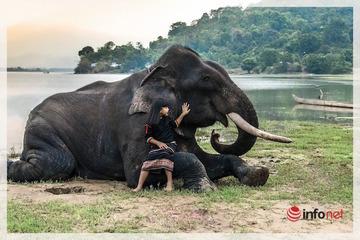 """Đến Hồ Lắk, chiêm ngưỡng vẻ bình yên những chú voi """"ăn, ngủ"""" cùng người bản địa"""