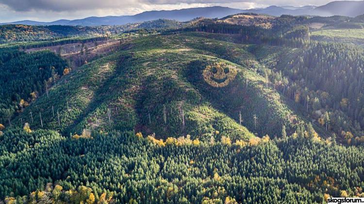 Mặt cười khổng lồ từ cây xanh xuất hiện trên sườn đồi