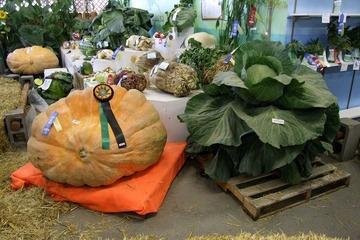 Tận mục sở thị xứ sở của những loại rau củ khổng lồ