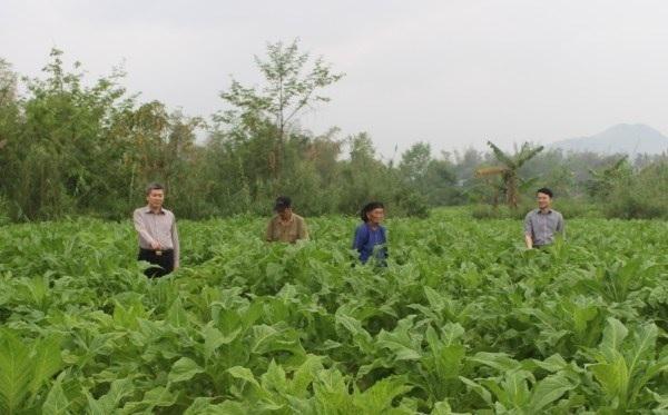 Cao Bằng: triển khai đề án nông nghiệp thông minh