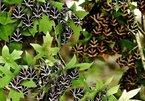 Vẻ đẹp thung lũng bướm hổ ở thiên đường Hy Lạp