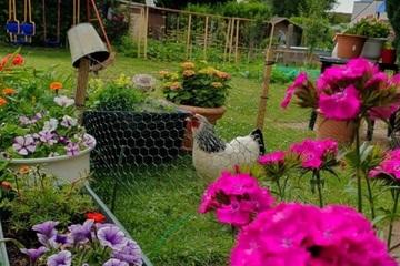 Cô gái năn nỉ chồng bỏ phố về nông thôn làm vườn giúp con hạnh phúc
