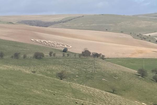 Kỳ lạ đàn cừu trăm con tạo thành vòng tròn bí ẩn