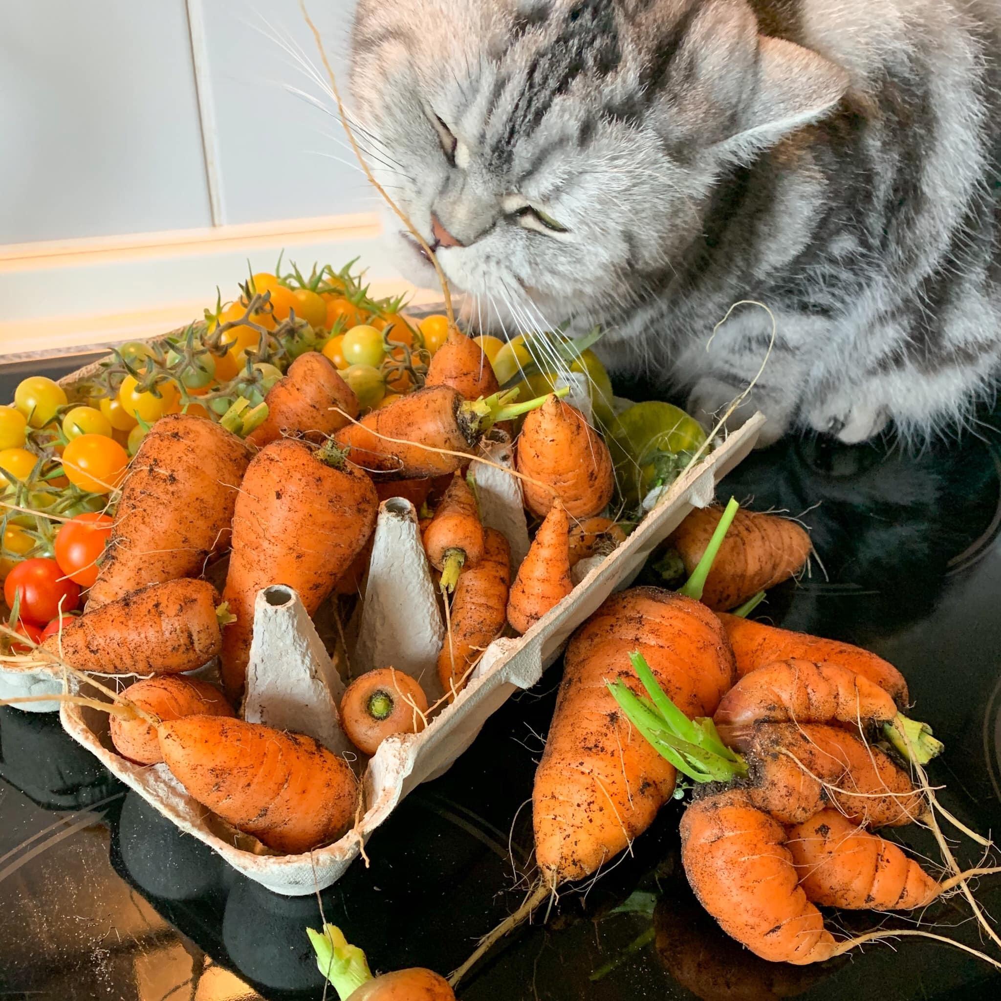 Khu vườn yên tĩnh trên ban công của cô gái yêu cây, yêu mèo
