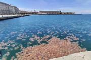 Đàn sứa khổng lồ đóng chiếm vùng biển Italia