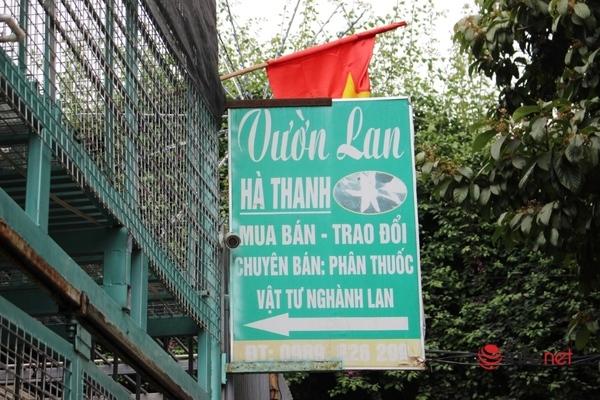 Chủ vườn lan Hà Thanh vác hành lý rời nhà 5 ngày trước, khách các tỉnh về tận nhà tìm