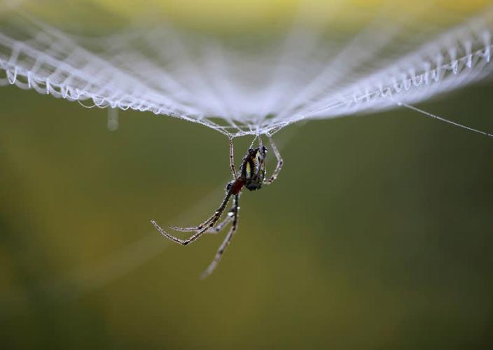 Mạng nhện tạo ra âm thanh đặc biệt gì?