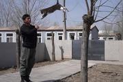 Nghề huấn luyện chó mèo đóng phim ở Trung Quốc