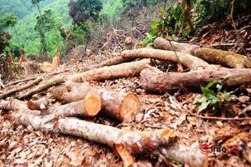 Vụ rừng tự nhiên bị chặt hạ ở Nghệ An: Phạt chủ rừng gần 40 triệu đồng