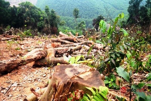 phá rừng tự nhiên,Hạt kiểm lâm,giao rừng,quản lý bảo vệ rừng,phá rừng,phạt,Nghệ An