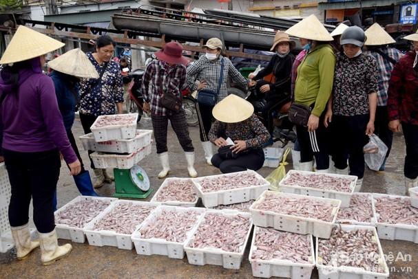 Mỗi chuyến biển, ngư dân Nghệ An lãi hàng trăm triệu đồng nhờ món này