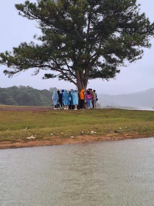 'Hội bạn thân' tránh mưa lớn dưới cây thông cô đơn, cư dân mạng 'lạnh gáy'