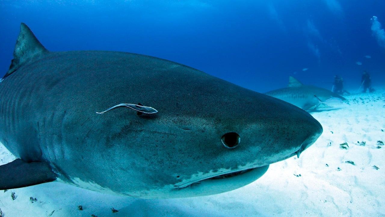 Không kịp tháo chạy, nữ du khách bị cá mập hung dữ tấn công