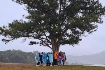 """""""Hội bạn thân"""" tránh mưa lớn dưới cây thông cô đơn, cư dân mạng """"lạnh gáy"""""""