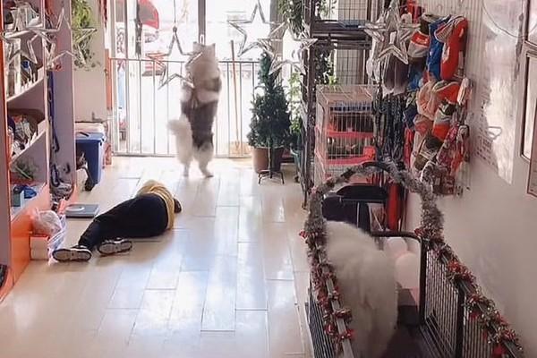 Thấy chủ gặp nạn, chú chó nhanh trí ngừng tập thể dục gọi người đến cứu
